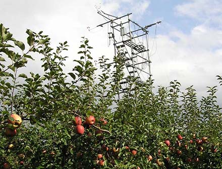 photo: Observation based studies on photosynthesis, evapotranspiration and carbon dynamics at the apple orchard