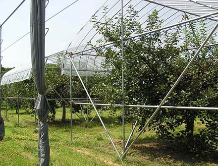 photo: Development of the organic cultivation technology of apple tree